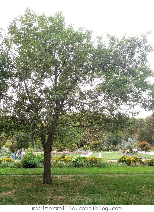 jardin des plantes 2 - marimerveille