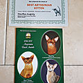 Breed award cfa et awards of excellence tica - abyssins