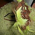 bouquet orchidee marron et plumes anis