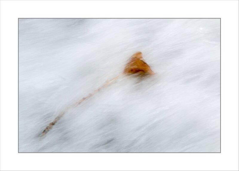 ville riviére courant branche feuilles 5 151016