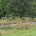 2008-09-18 P9186163
