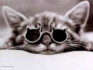 chat_lunettes