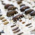 Juvisy-sur-orge : 20eme bourse exposition internationale aux insectes 2014