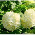 Bouquets de pentecôte...