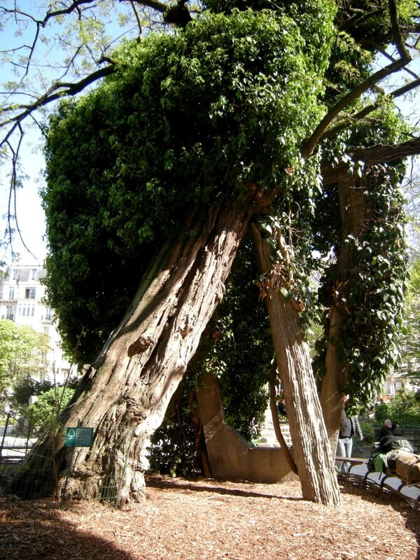 paris robinier square rene viviani-montebello