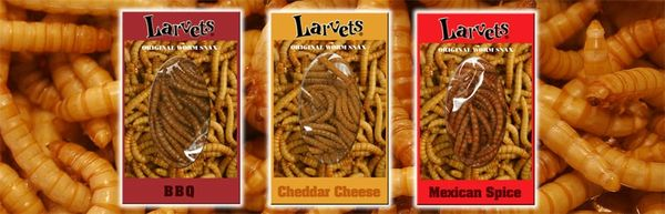insectes comestibles larves