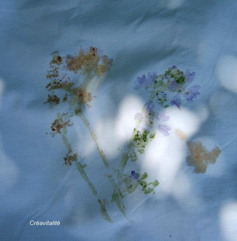 mauve, lilas d'espagne