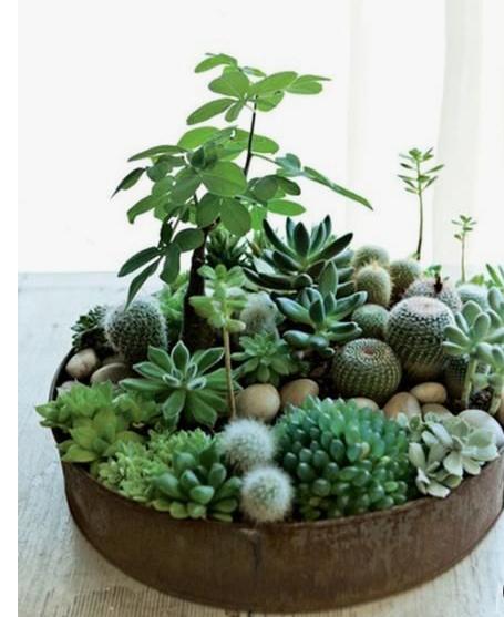 plantegrasse8