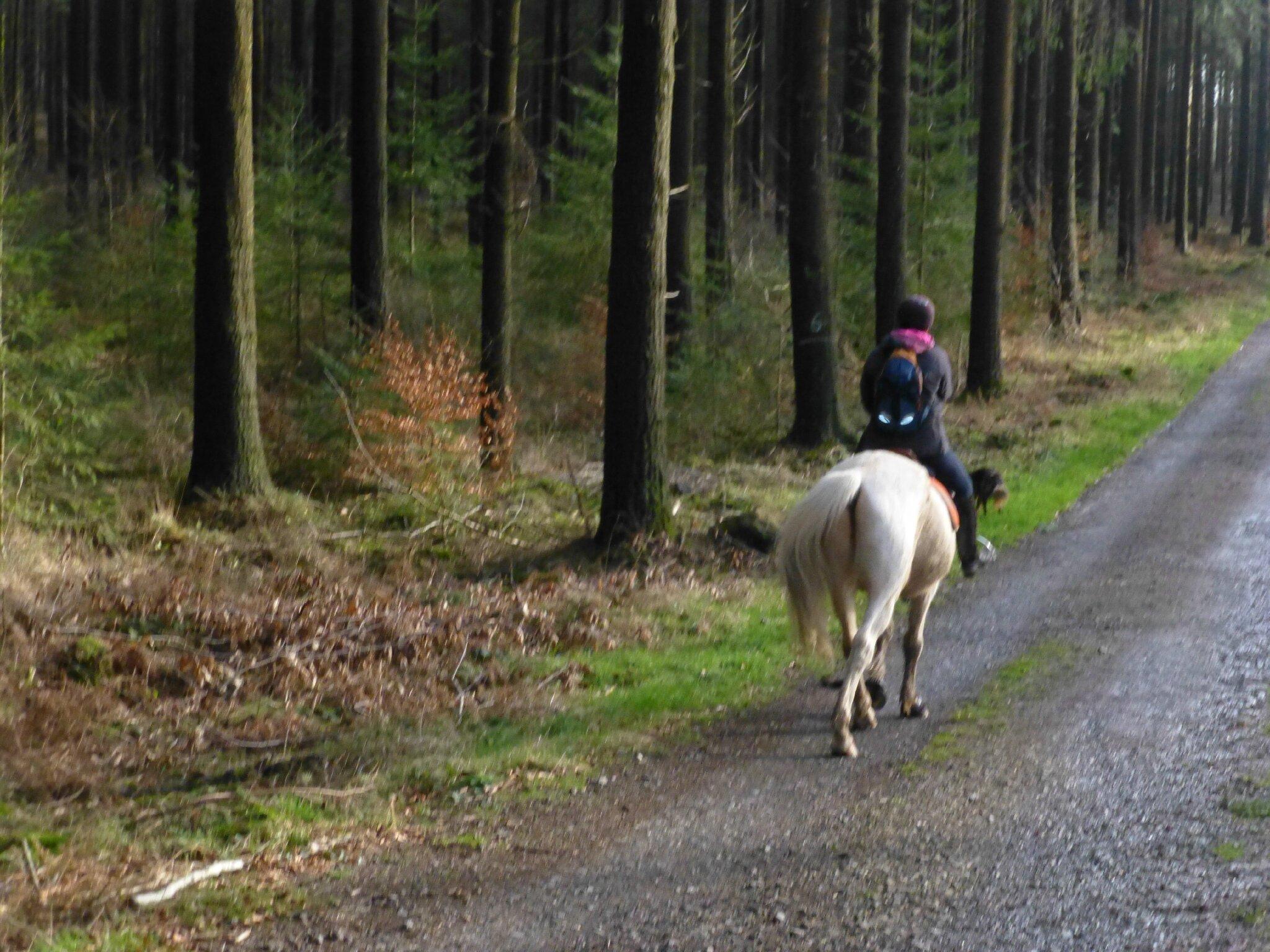Balade à cheval dans la forêt P1080253
