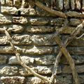 Les racines du mur