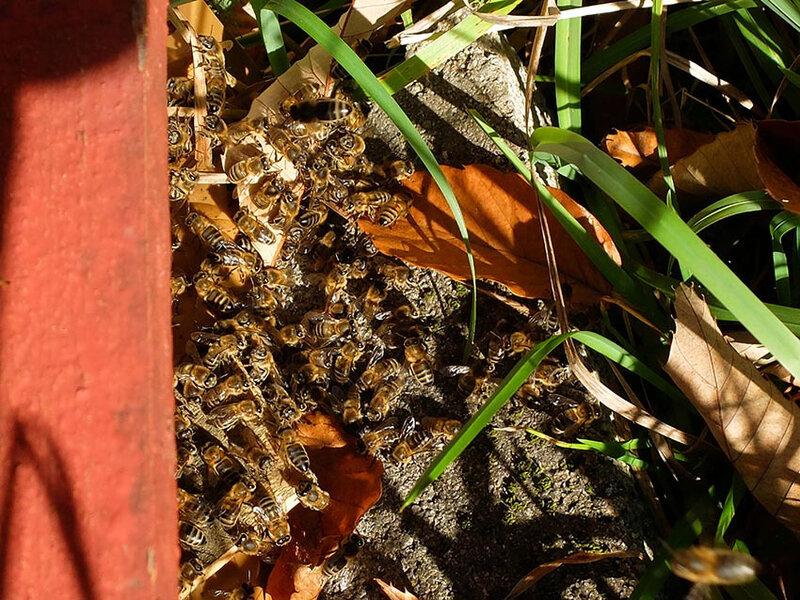 Un rayon de soleil et les abeilles sont sur la planche d'envol