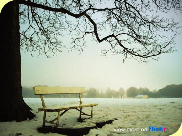 bench_tree_phoenixpark