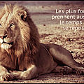 lion repos
