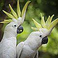 perroquet 6