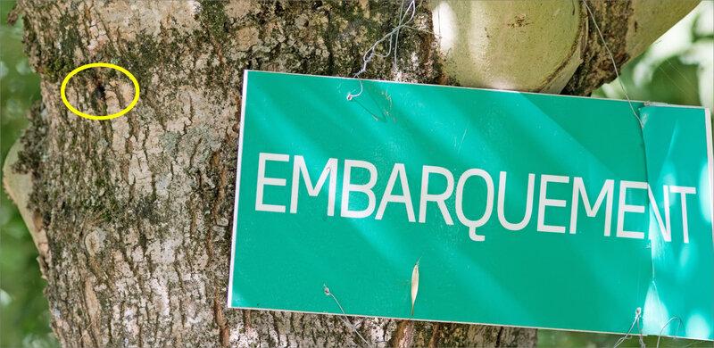 ville lucane creuse écorce frêne 170818 4 pancarte embarquement