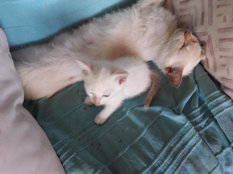 Swann et son chaton 3