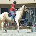 Jeux équestres manchots 2013 (229)