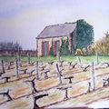 Maison de vignes
