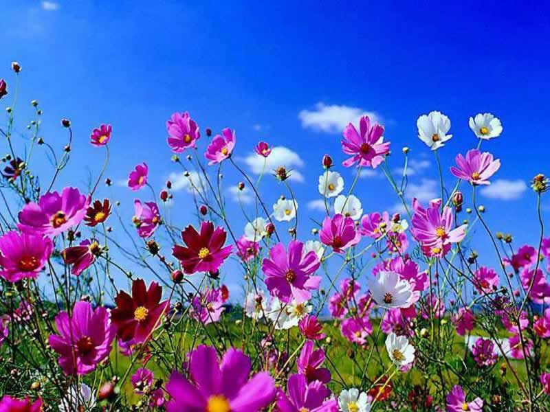 je vous offre des fleurs des champs pour vous au petit bonheur. Black Bedroom Furniture Sets. Home Design Ideas