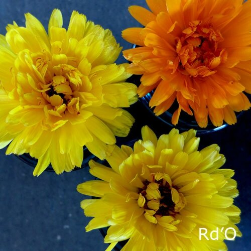 couleur-trio-blog-01