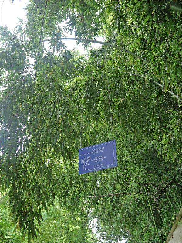 Arboretum poétique bambous 020721 1