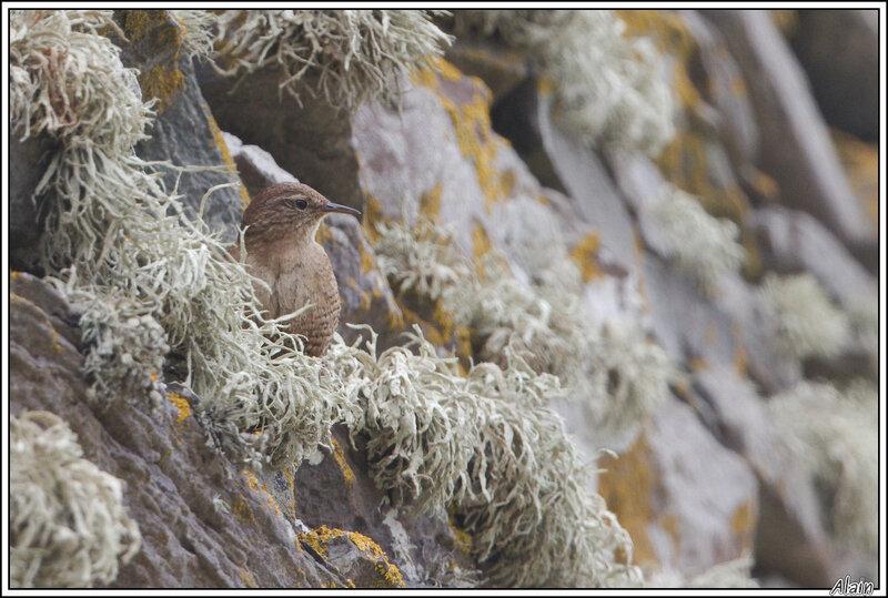 le même, dans les lichens