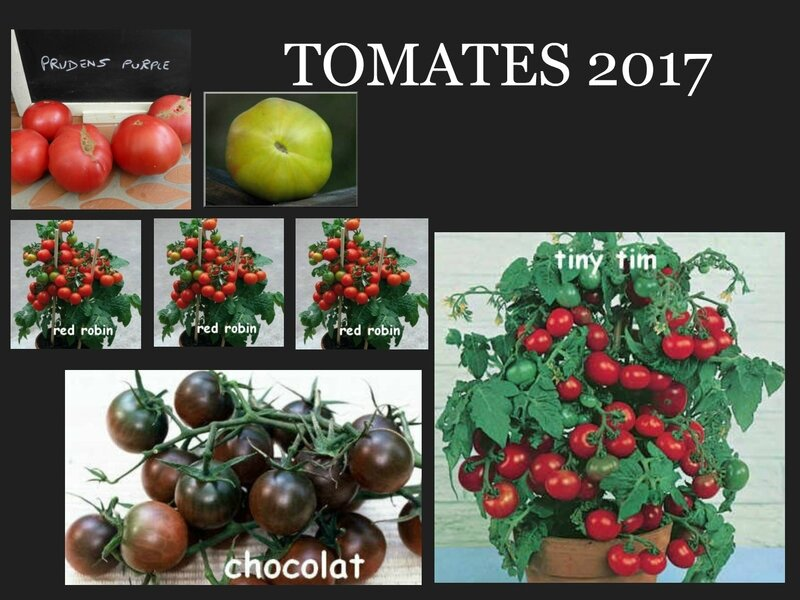 tomates 2017 3