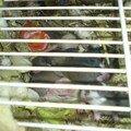 ratons de Petite-Maron2