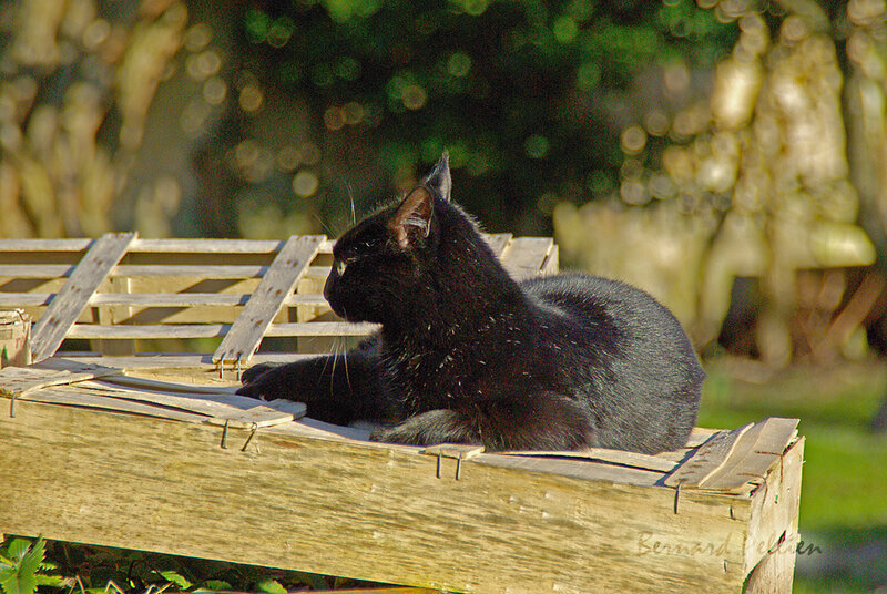 202000206_animaux_chat_02