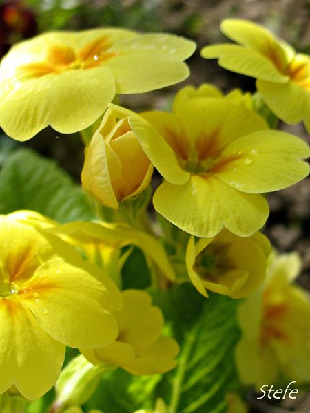 fleurs loigné (5)
