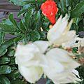 FLeurs de grenadier et de yucca