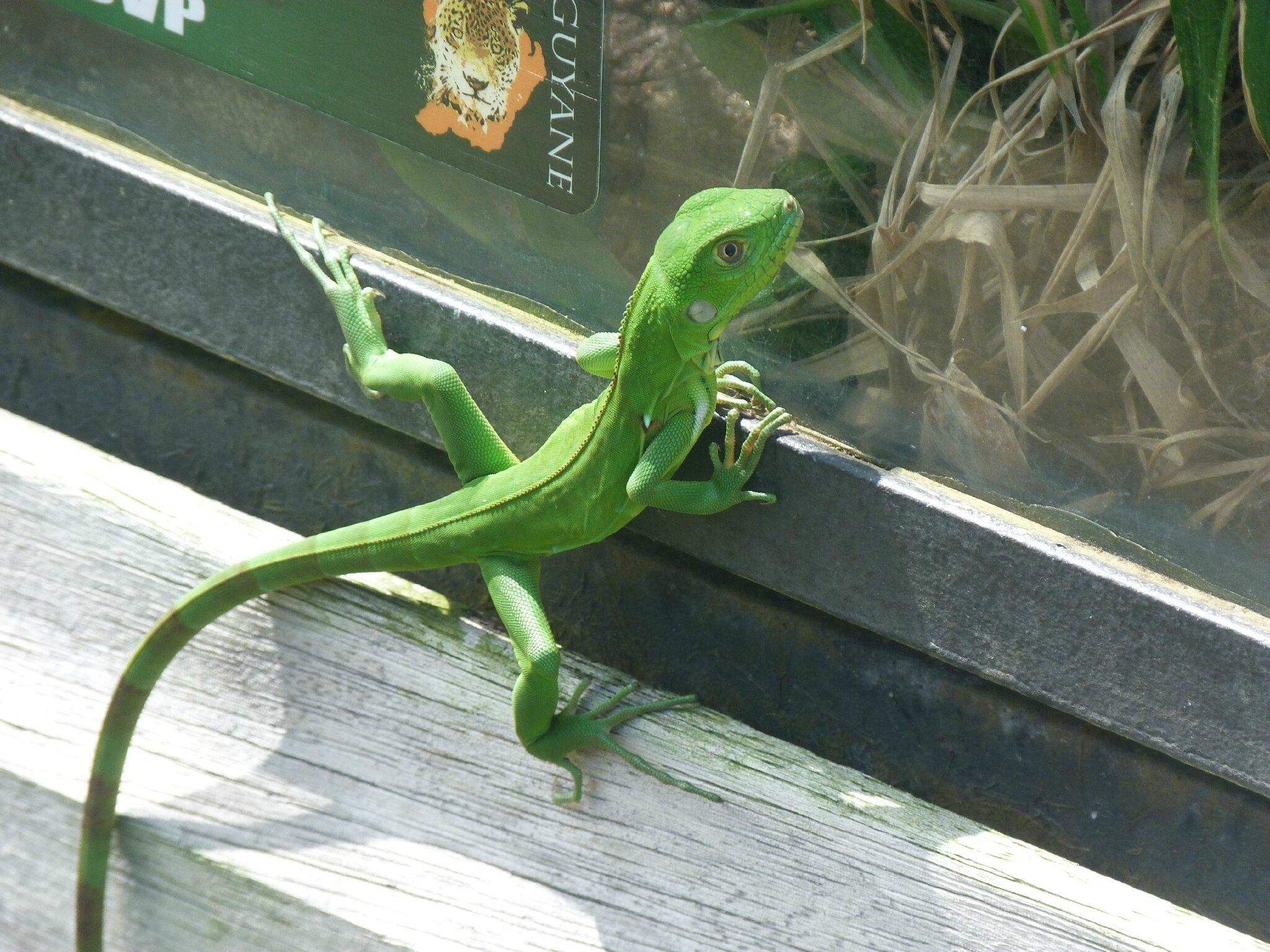 * zoo de Guyane *