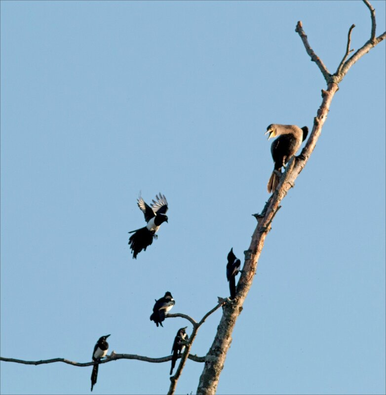 ville cormoran pies matin 290916 4