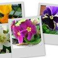 Les fleurs de la terrasse