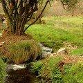 Une rivière tranquille