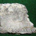 Aragonite h421