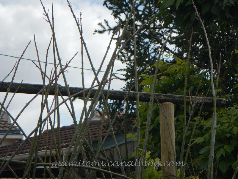 Une mésange posée sur une branche