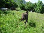 poneys_170511_003