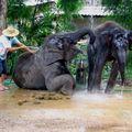 Chiangmai 42