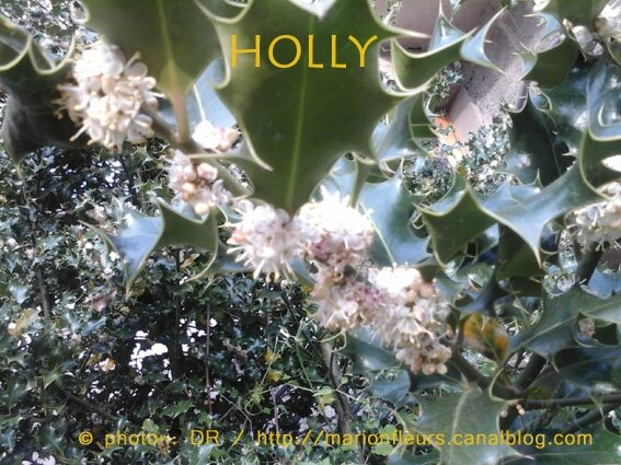 Holly, chemin de conscience