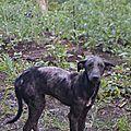 Clena 1 misère ambulante en train de mourir dans la forêt tropicale