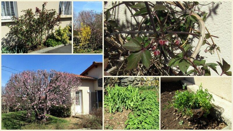 Au jardin 29 mars 2017 2