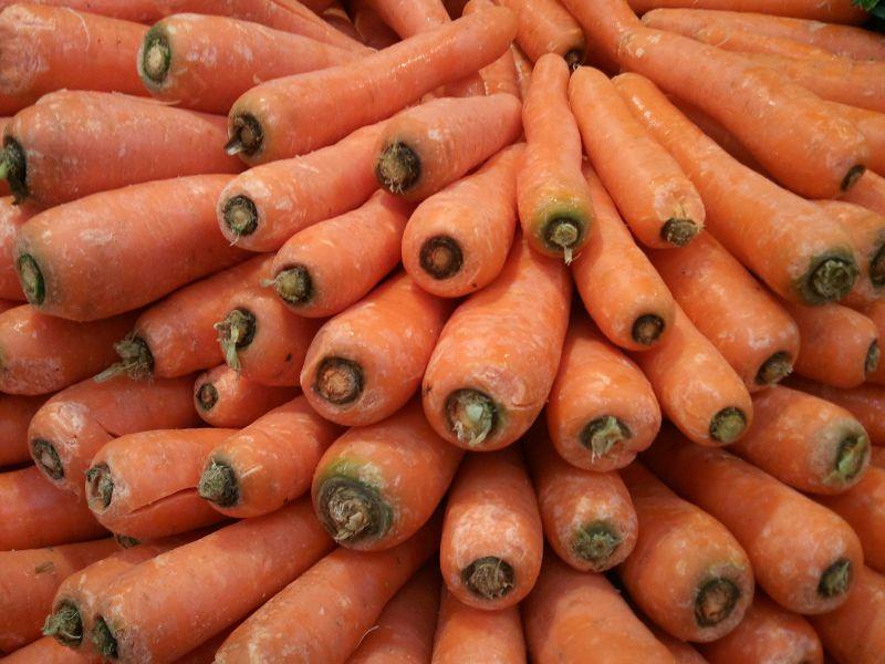 carottes en tas
