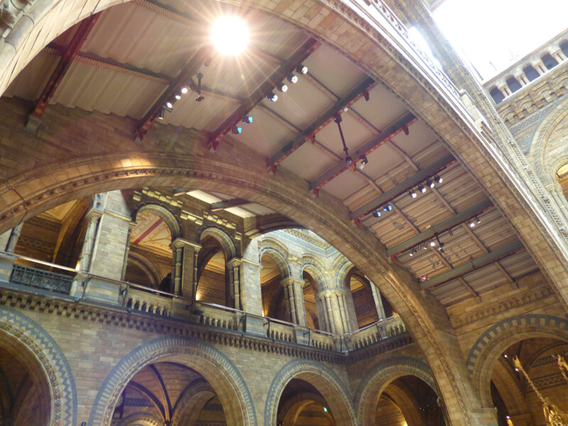 25 Londres Natural History Museum (12)