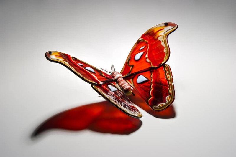 Des-sculptures-de-verre-de-papillons-en-voie-de-disparition-par-Laura-Hart-1-attacus-atlas