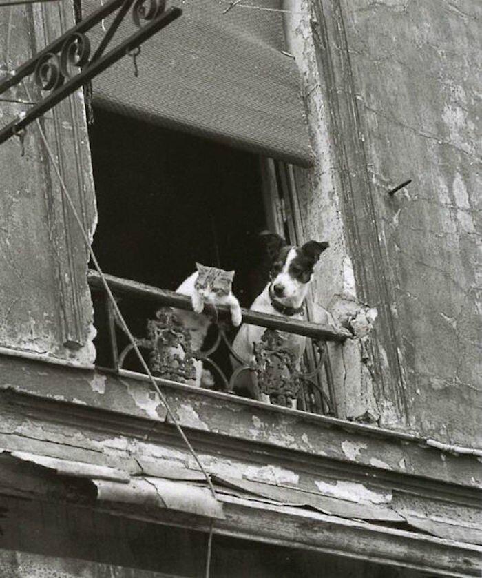 paris-chats-photos-Annick-Gérardin1