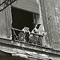 paris-chats-photos-Annick-Gérardin1