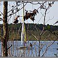 Lac Soustons 1204154