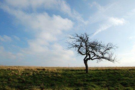 arbre_de_f_vrier