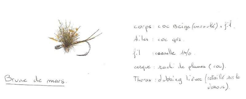 planche dessin mouche 001 (2)